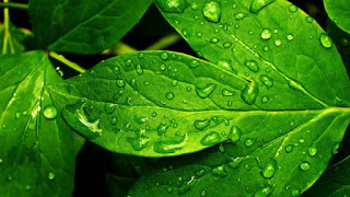6895508-green-nature-backgrounds
