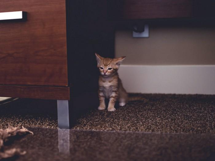 kitten1-700x525c.jpg