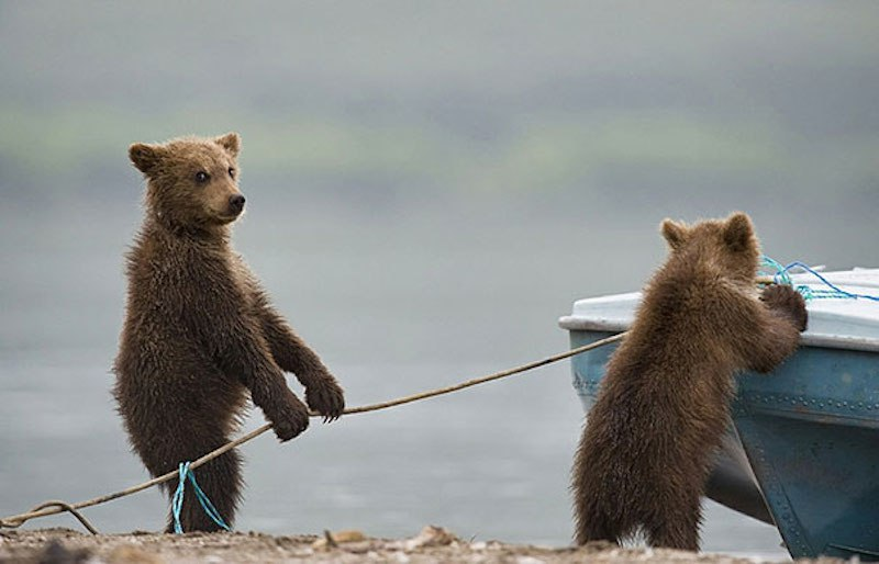 funny-bears-doing-human-things-6.jpg